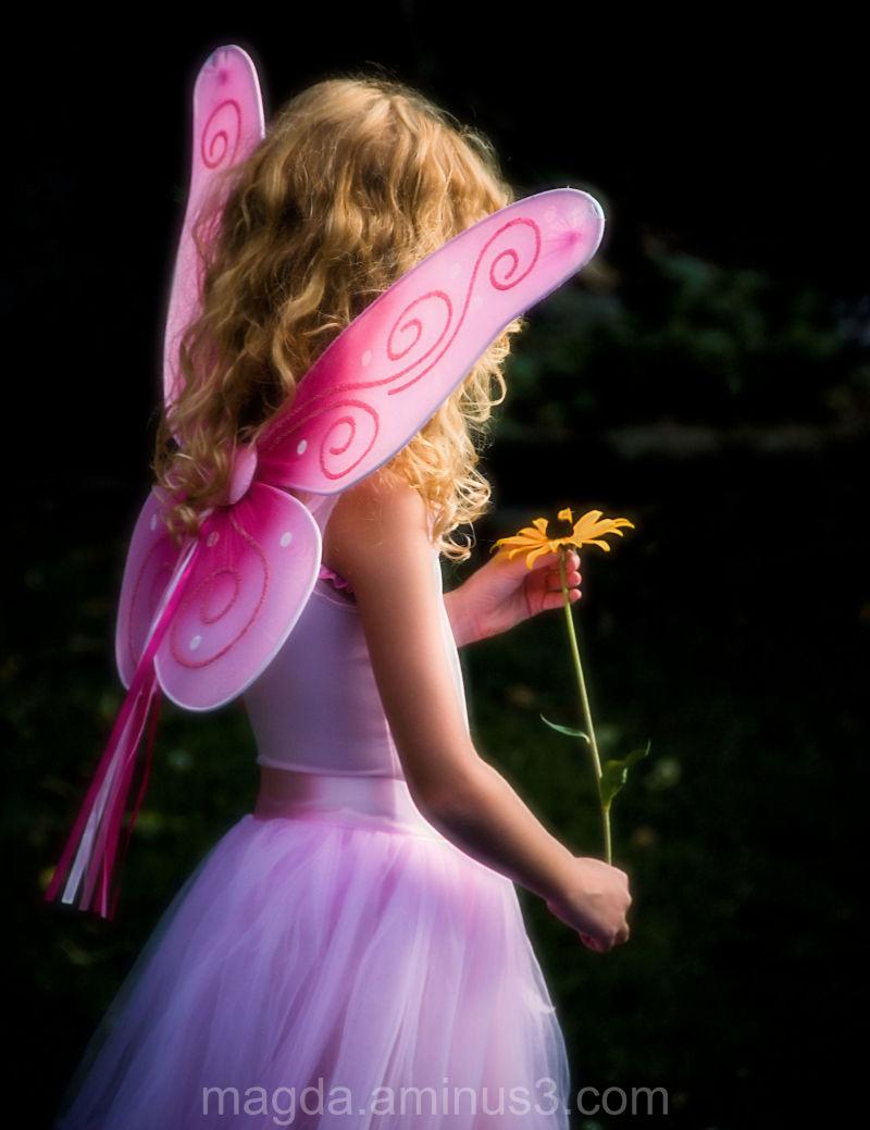 Fairy Land (1)