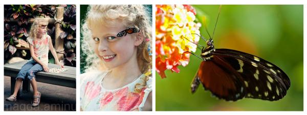 Butterfly Garden  #4
