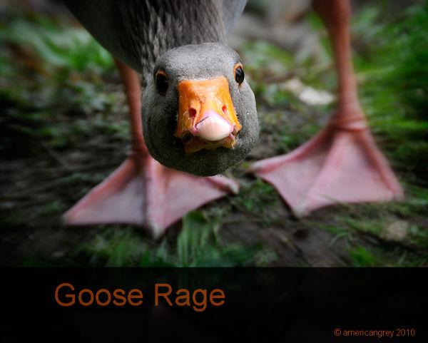 Goose Rage