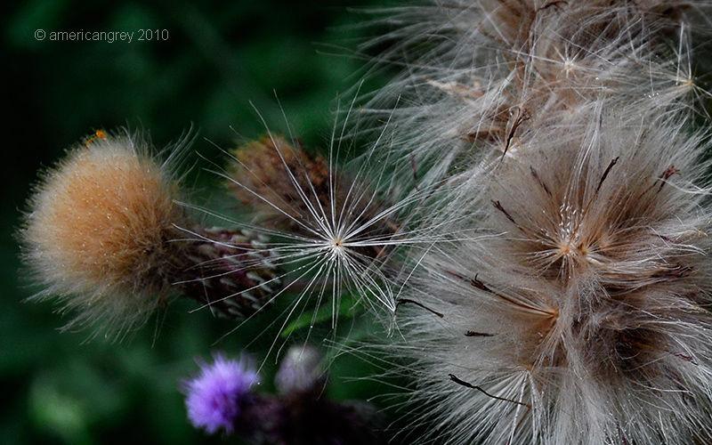 Summer Weeds 7/7