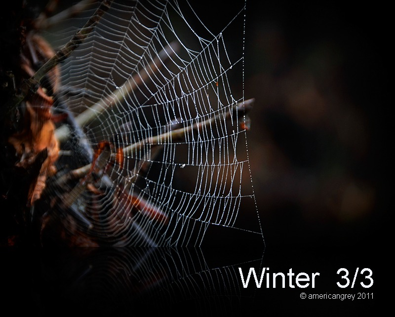 Winter  3/3