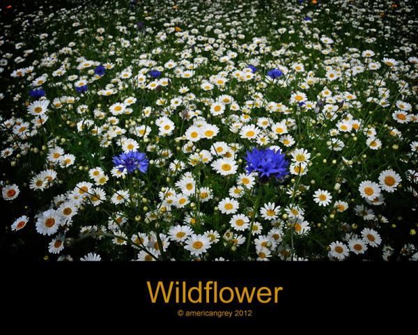 Wildflower 1/3