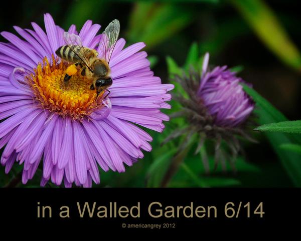 Walled Garden 6/14