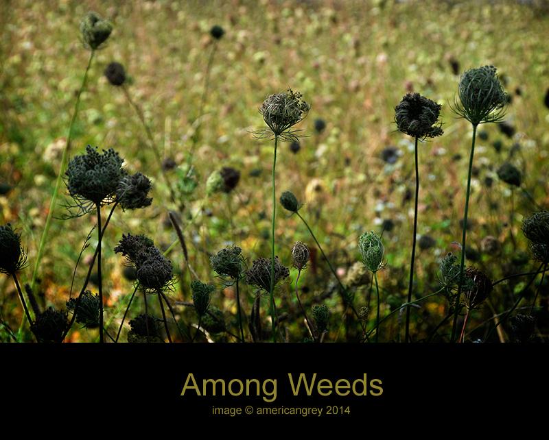 Among Weeds