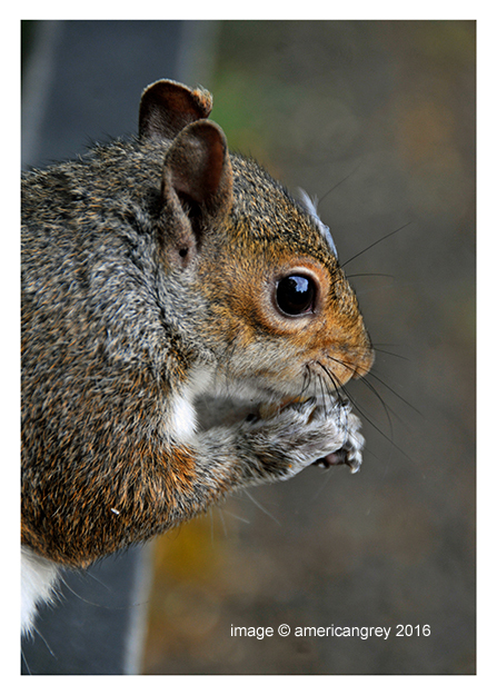 Sunday Squirrel