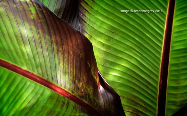 Among Green