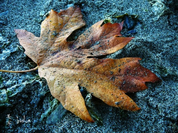 leaf on the sand