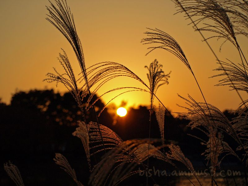sunset at Showa Kinen Park