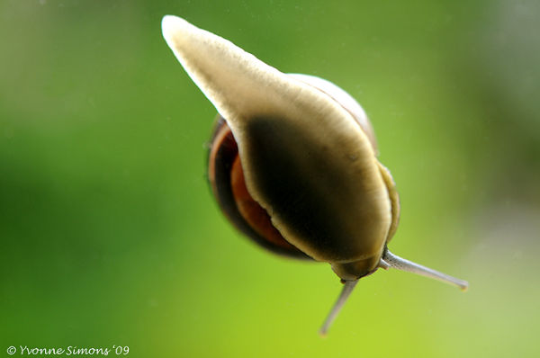 Window snail