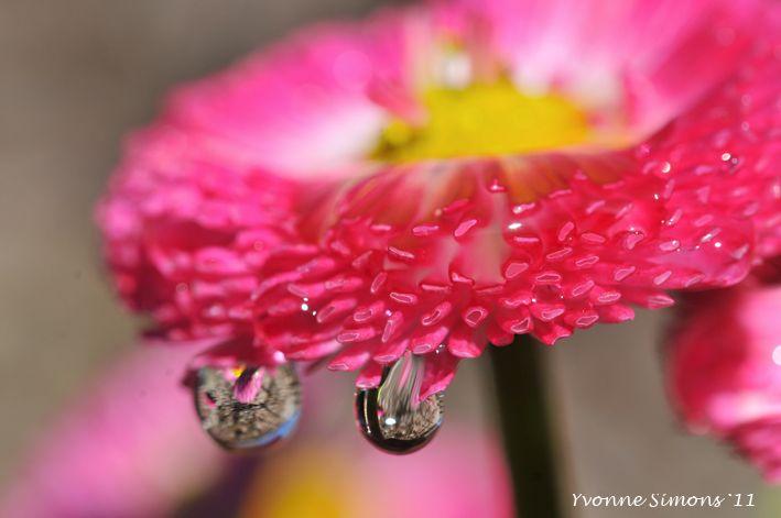 Drops2