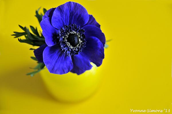 The yellow vase #7