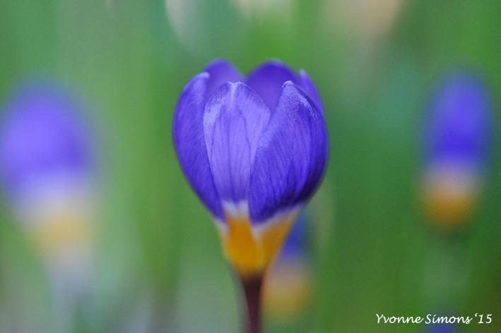 Een beetje lente….