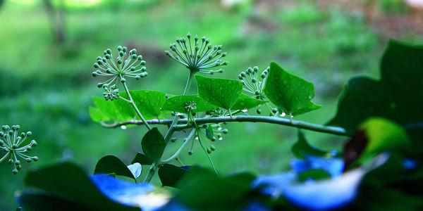 nature, plants