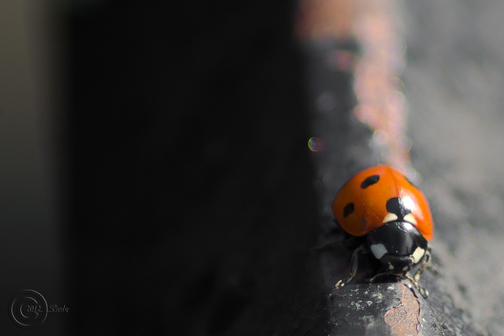 Ladybird, Westoe Village, South Shields