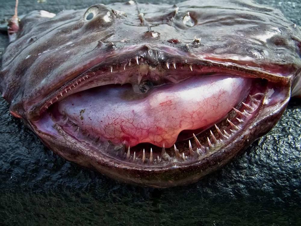 Monkfish, North Shields fish quay