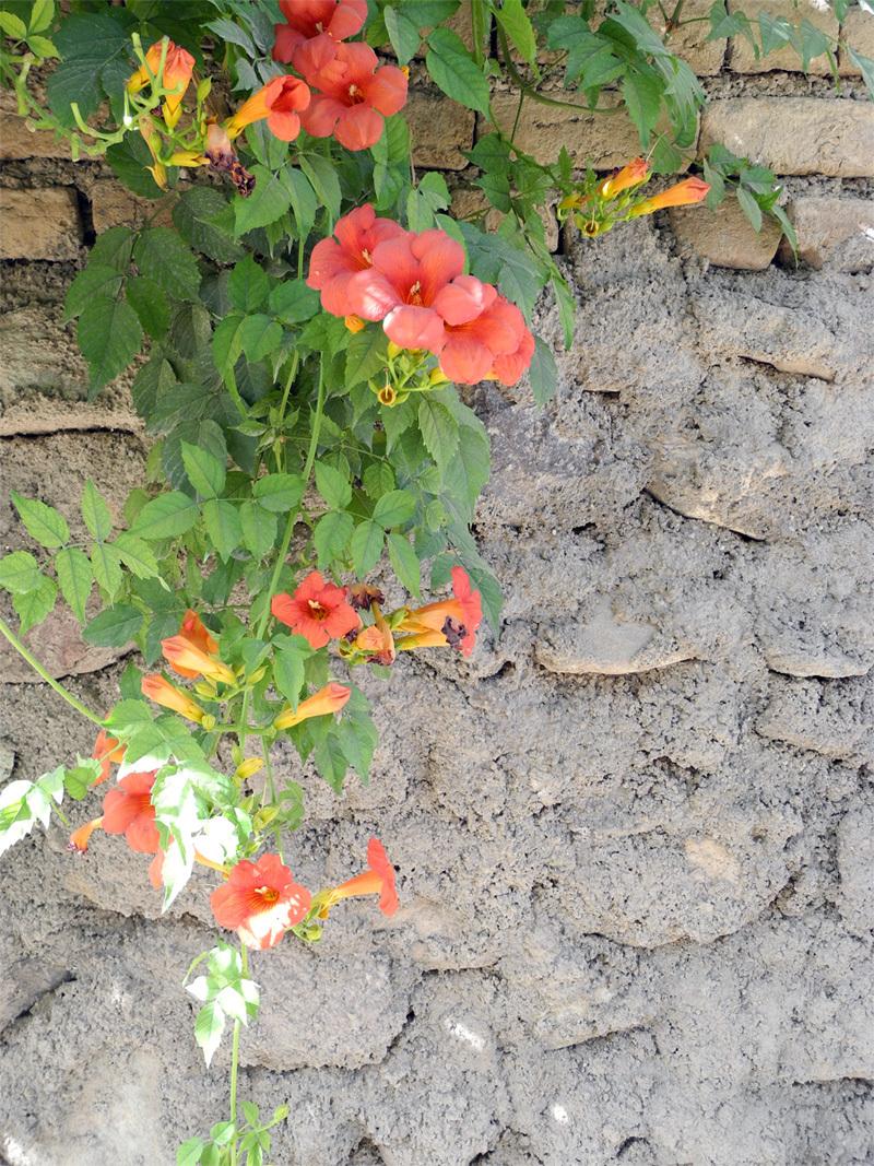 Anar Flower