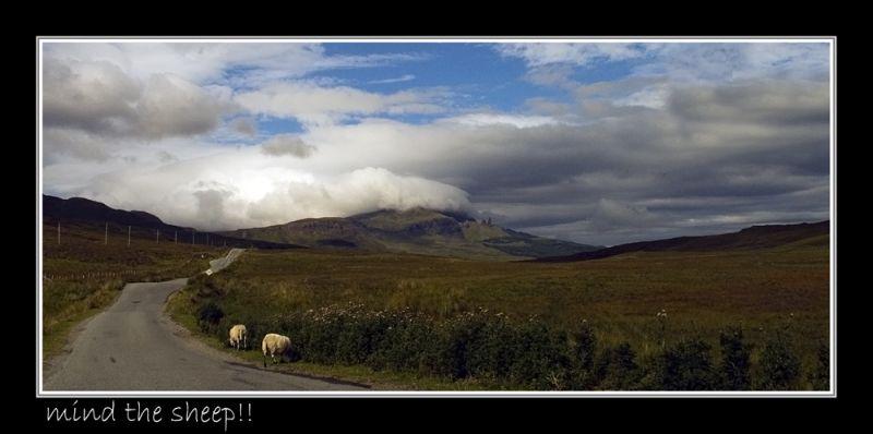 mind the sheep!