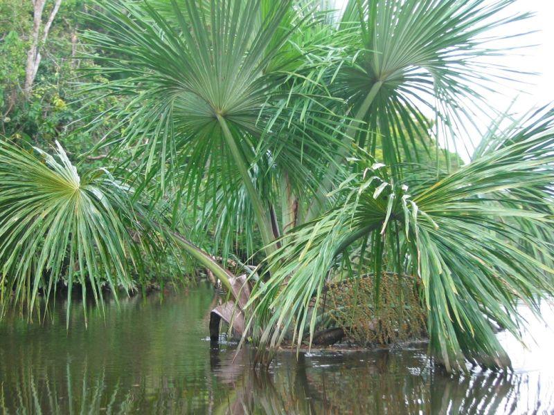 Quand tout coup un palmier plant nature photos batko 39 s photoblog - Quand tailler un palmier ...