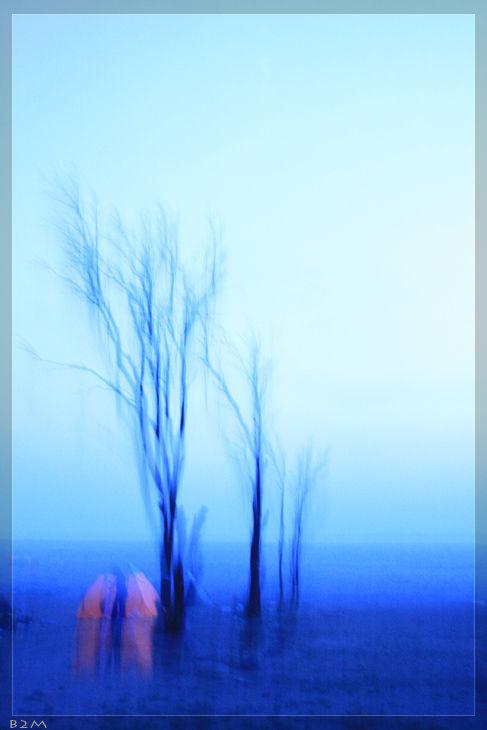 Trees symphony II