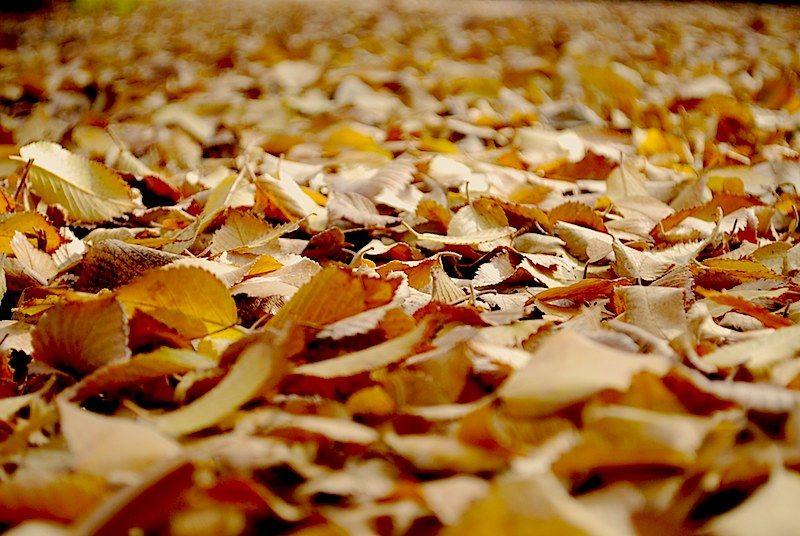 Walk in fall,fall in love!