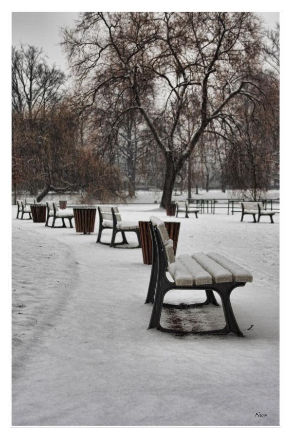 Under the snow ...