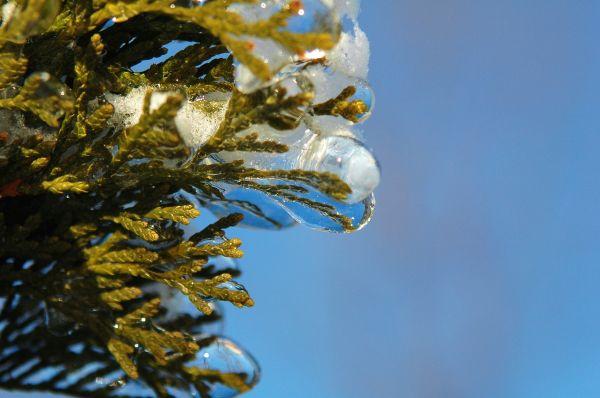 iced arbevita 4