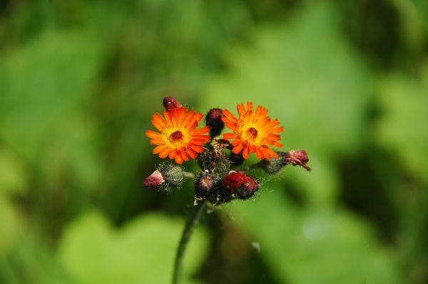 Pretty Wild Flower