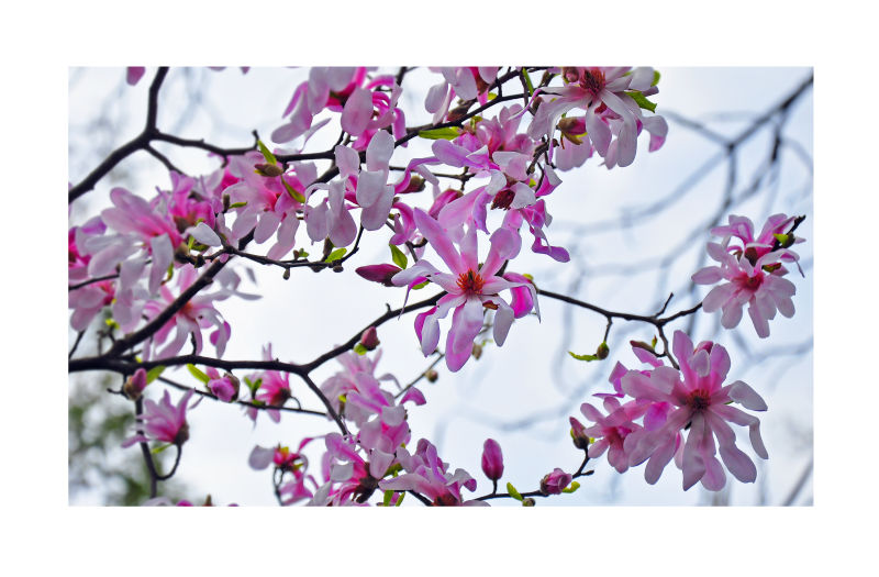 spring has sprung :)