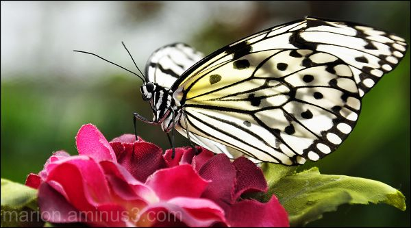 Butterfly Show #6