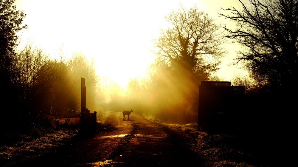 Inutile la chèvre libre de la zad nddl