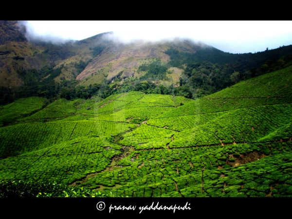 mountain greens of munnar