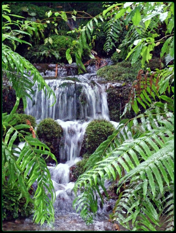 Waterfalls through ferns