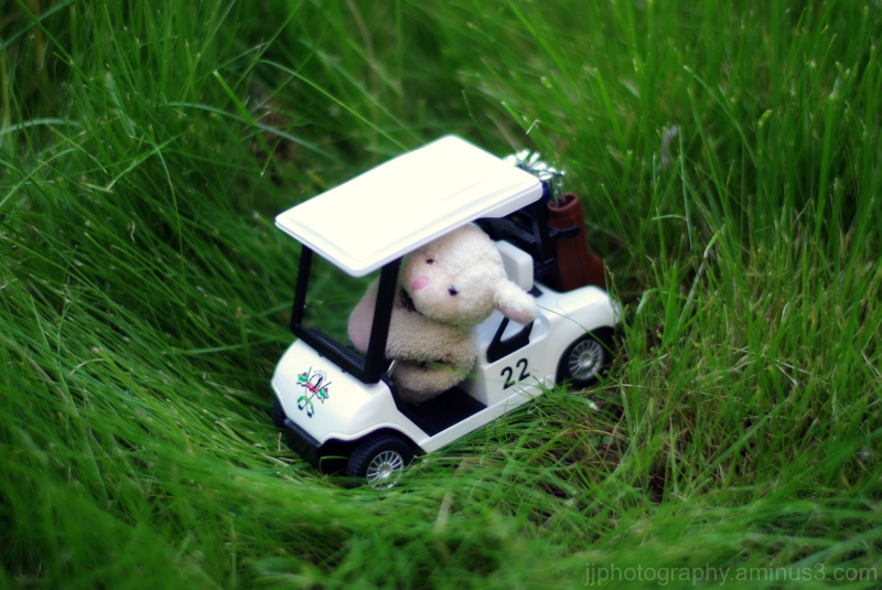 little sheep riding a toy golf cart