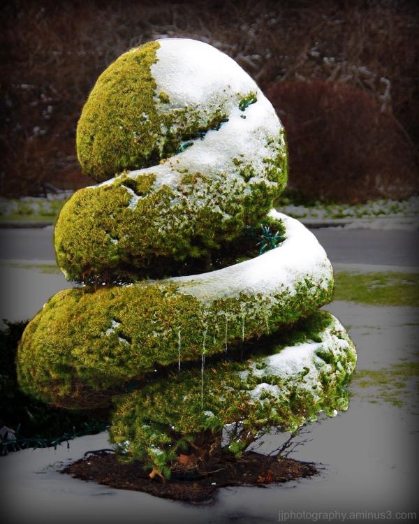 A little bush freezing