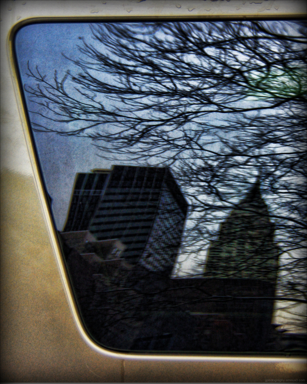 Reflections in a car window