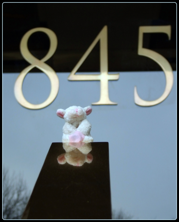 sheep and 845