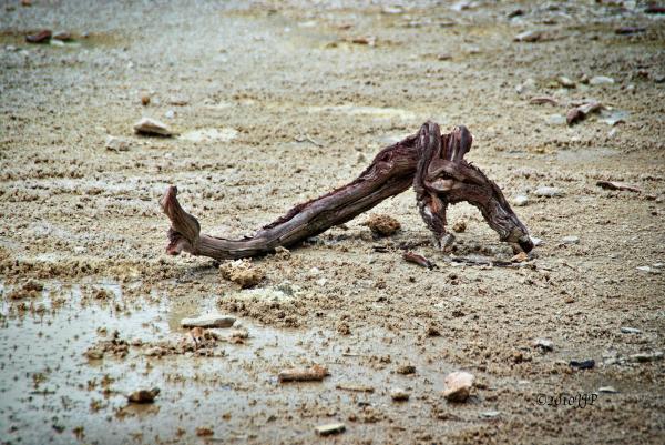 Driftwood looking like a skull
