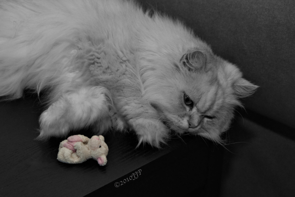 The cat and toy sheep rest