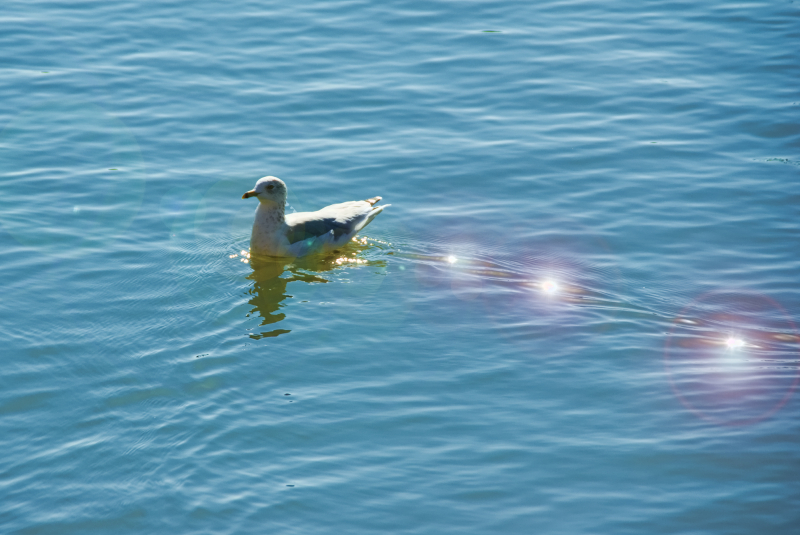 A seagull and light speckles