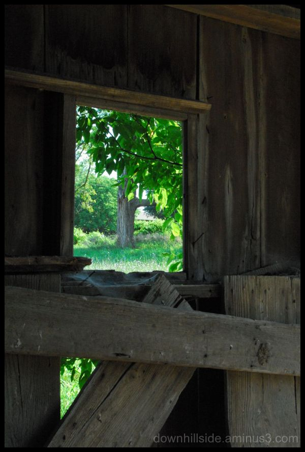 View from An Old Barn
