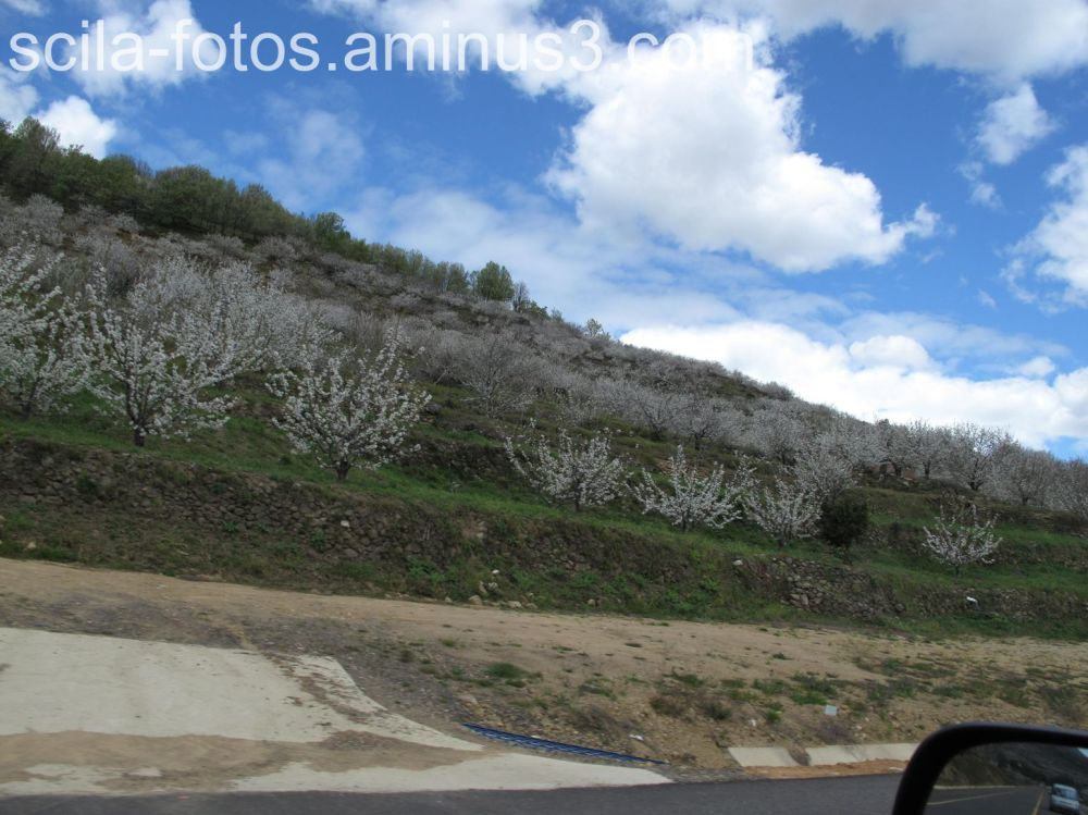 Floración de los cerezos en el Valle del Jerte.