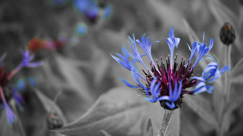Blue Flower Alaska