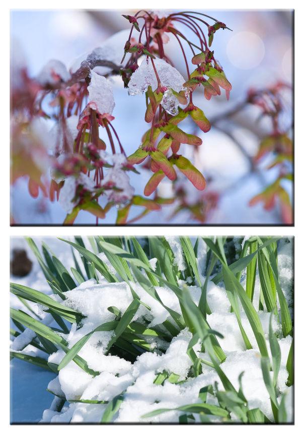 snow spring
