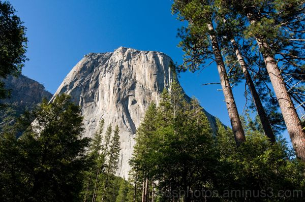 El Capitan with Trees