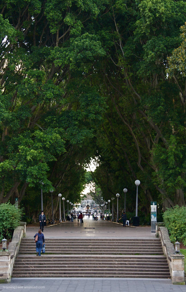 St James boulevard in Hyde Park Sydney