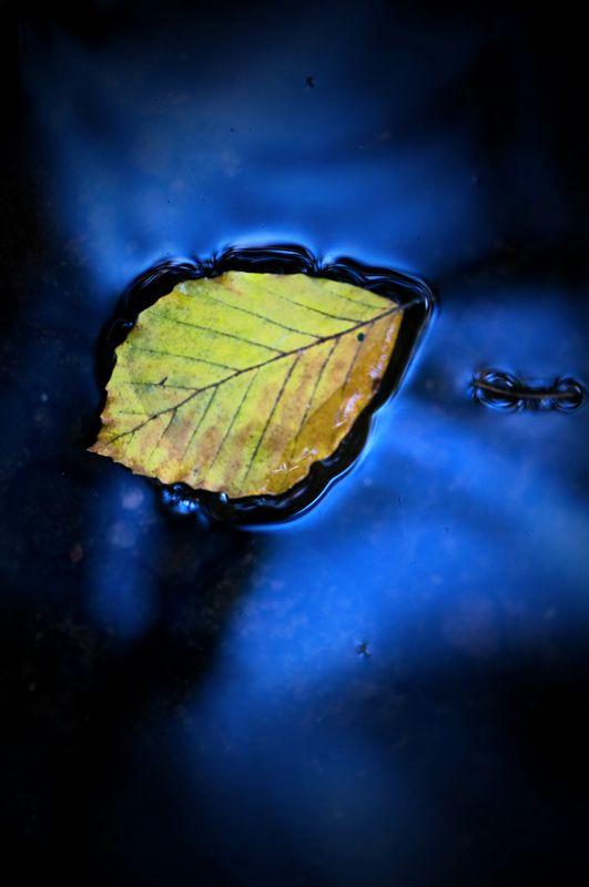 Leaf In River Bollin
