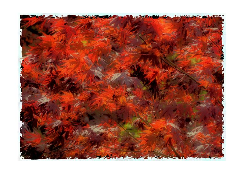 Impressions of an Acer