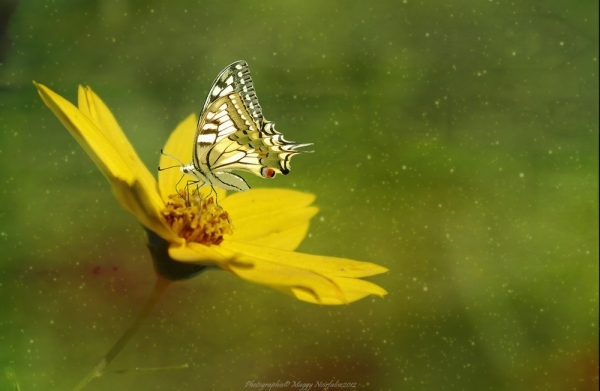 Douceur jaune