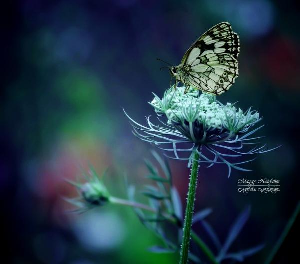Dans le jardin bleu...