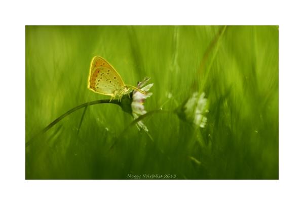 Dans l'herbe